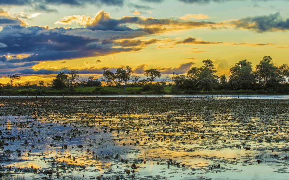 243031-pantanal-wetlands